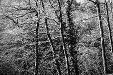 Cantal, 2006