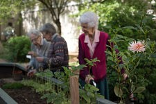Old ladies taking care of their plantations.