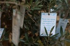 Young oliver tree and wishes of old people living in a retirement home in Paris, September 2017.Jeune olivier auquel sont suspendus les voeux des résidents d'un Ehpad à Paris, Septembre 2017.