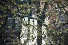 En ce tout début de printemps, je peux encore apercevoir à travers les feuillages clairsemés des arbres du Canal un jogger dans une rue d'en face.