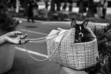 Doggy in a her basket held by her mistress on the Croisette, Cannes Film Festival 2017. Toutou dans son panier tenue par sa maîtresse sur la Croisette, Festivale de Cannes 2017.