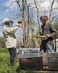 Quand elle était demandeuse d'Asile, Dalanda a pu passer du temps avec un apiculteur du coin dans le cadre d'échanges organisés par le CADA, Avril 2019.