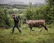 Lucie, chez elle, avec une jeune vache que le couple vient d'acquérir, Durban sur Arize, Mai 2020