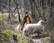 Zoïs est presqu'un berger accompli désormais et fait un tour de France des Bergeries en solitaire avant sa future installation, peut-être chez ses parents, au Cap del Pouech, Mars 2021