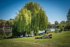 Couple leaning on the grass looking into each other eyes near a weeping willow and the River Garonne, at the Prairie des Filtres, Toulouse, April 2017. Couple allongé dans l'herbe se regardant au fond des yeux près d'un saule pleureur et de la Garonne, à la prairie des Filtres, Toulouse, Avril 2017.