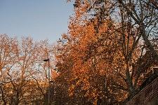 Trees in the color of the fire, Fall, Toulouse, Décembre 2016. Arbres couleur de feu, automne à Toulouse, Décembre 2016.